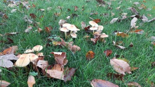 2019-10-22 in de herfst groeien er paddenstoelen bij brievenbus