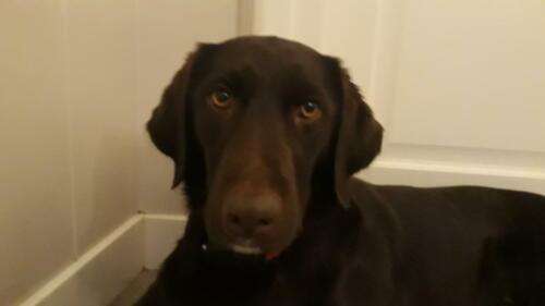 2019 de hond amber