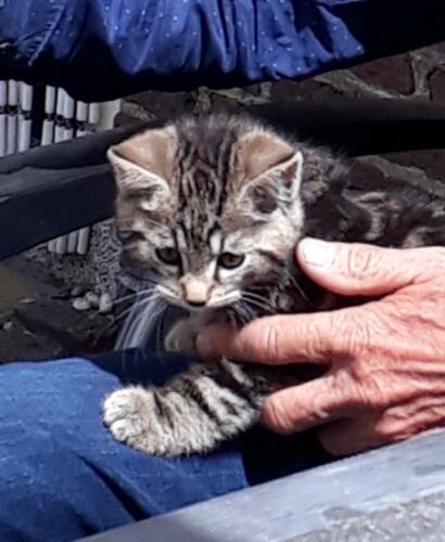 2019 juni 1 van de 2 kittens; Sammy