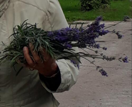 2020-09-04 Lavendel uit eigen tuin
