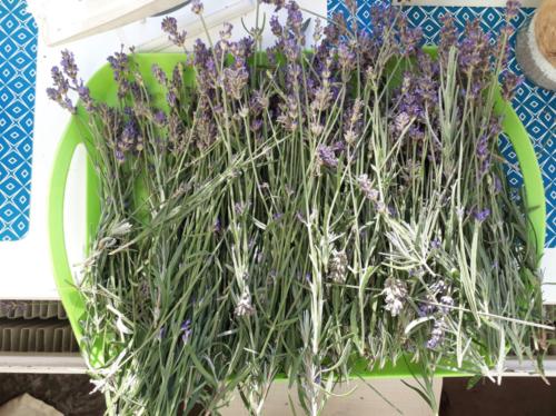 2018 lavendel uit de tuin,
