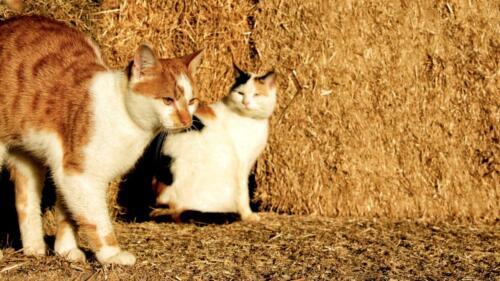 katten-in-stro