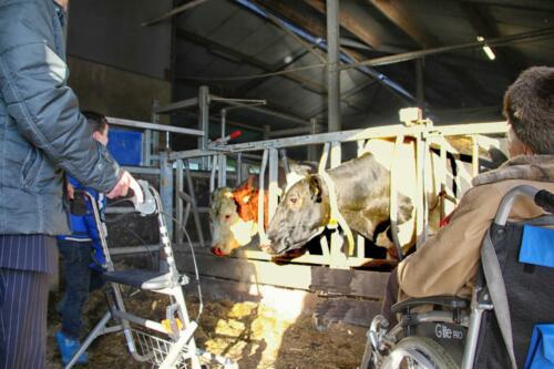 2015 In de koeienstal